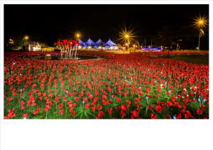 Poppy-Scupture-night-light-2-300x212